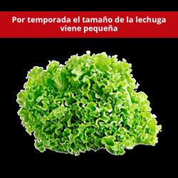Lechuga Escarola