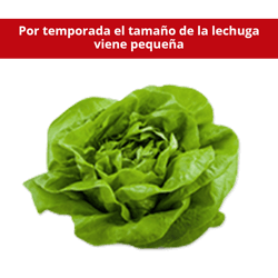 Lechuga Francesa