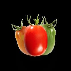 Tomate Pizzadoro Colorido